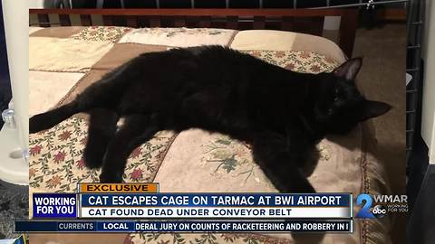 Frantic search for lost cat at BWI Airport after it escapes cage on tarmac