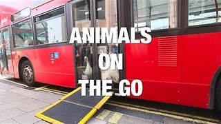 Animals on the Go - Video