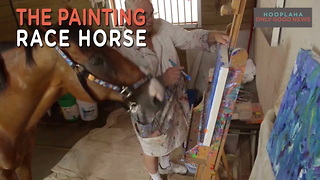 Metro The Painting Horse - Life After Racing - Video