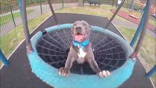 Delighted Dog Enjoys Swinging Around
