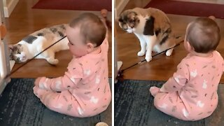 Baby cracks up while playing with her kitty