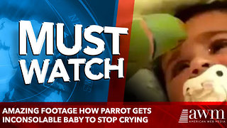 amazing footage How Parrot Gets Inconsolable Baby To Stop Crying - Video