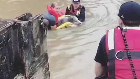 Family With 4 Kids, Pet Pig And 3-Legged Dog Rescued From Flood Waters