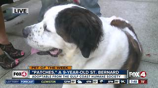 Pet of the week: Patches - Video