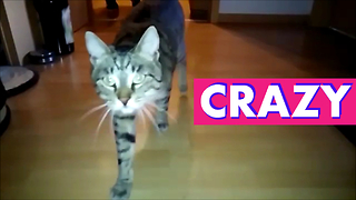 Amazing Crazy Cat Head Wiggle - Video