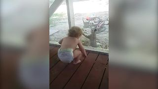 A Cat Gives A Toddler Girl All The Giggles - Video