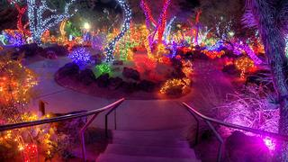 This Nevada Garden Celebrates the Holidays by Wrapping Cacti in Christmas Lights - Video