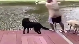 Dogs who think their owners get drowned - Video