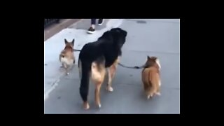 These Dogs Get Around With a Little Help From Their Friend