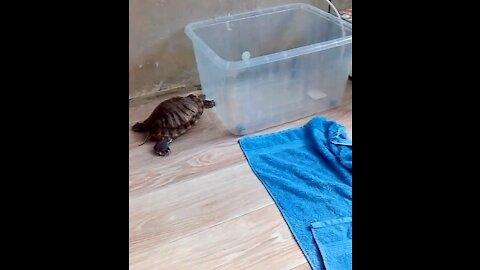 The turtle pushing a container