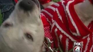 Former bait dog makes remarkable recovery - Video