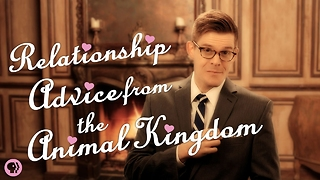 S4 Ep20: Relationship Advice from the Animal Kingdom - Video