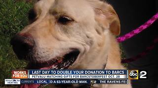 BARCS' largest fundraising event happening this weekend - Video