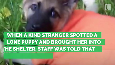 Puppy's Back Crushed, Vet Says To End Life. Rescuer Refuses, Gets Miracle She Always Believed In