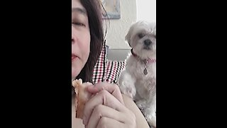 Sweet pup gently begs for some of owner's lunch