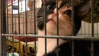 Tri-County Animal Rescue expands in Boca Raton - Video