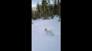 Ares leads dad in backcountry skiing up and down