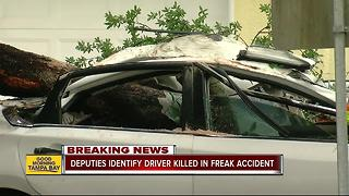Driver dead after tree crushes car in Tampa - Video