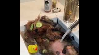 Pampered Pooch Enjoys Luxurious Bath - Video