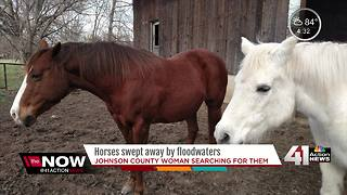 Horses swept away by floodwaters in southern Johnson County - Video
