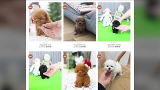 BBB warns about online puppy scams