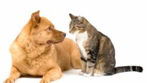 Cat and Dog playing - funny video full HD