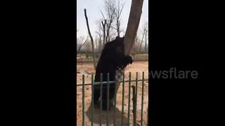 Bear's reaction after biscuit isn't tossed to him will melt your heart - Video