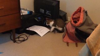 Kitten vs The Printer - Video