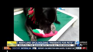 Maryland SPCA collecting toys with