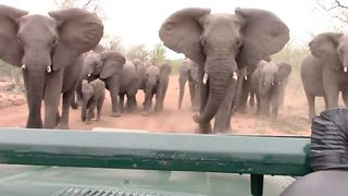 Angry Elephant Charges At Safari Van Full Of Tourists - Video