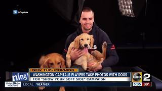 Washington Capitals players show their soft side - Video