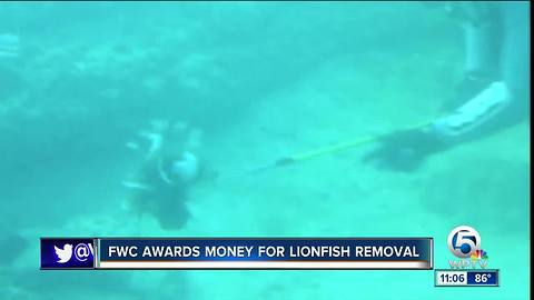 5 groups get $250,000 to research Florida lionfish removal