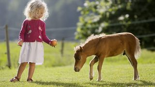 World's smallest horse – Pony who acts like a puppy - Video