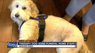 Therapy dog joins funeral home staff