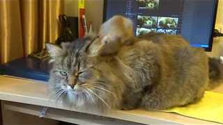 Squirrel and cat best buddies - Video