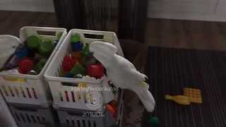 Ruthless Cockatoo Dominates Box of Toys - Video