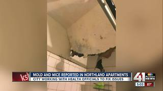 Residents angered with mold in apartment complex