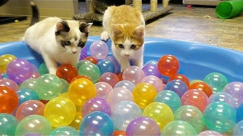 Kittens Prove That Ball Pit Is Not Their Thing