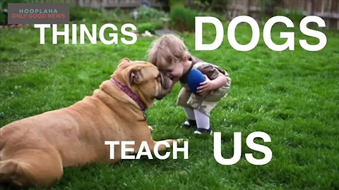 Other Than Being Our Pets, Dogs Can Also Be Our Teachers
