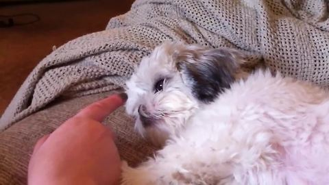 Adorable dog doesn't like her nose touched