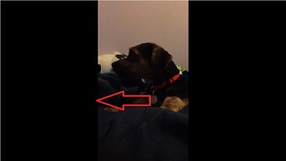 Mom sings lullaby to son, puppy