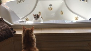 Jack the  Curious Cat Gets a Bathtub Surprise  - Video