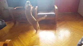 Three-Legged Rescue Kitty More Agile Than Most Cats - Video