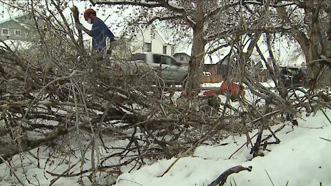Spring snowstorm creates wealth of work for arborists