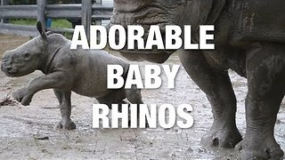 Who Knew Rhinos Could Be So Cute? - Video
