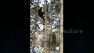 Kung fu master climbs tree in seconds