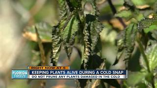 Keeping plants alive during a cold snap