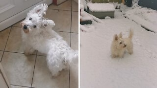 Adorable puppy sees snow for the very first time