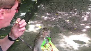 Don't Trust The Monkeys - Video