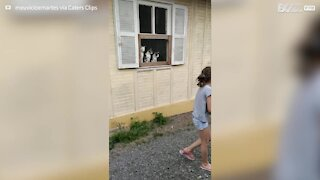 Trio of cats mesmerized by children playing with ball